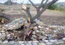 Αποκαταστάθηκαν οι ζημιές σε αρχαιολογικούς χώρους της Χαλκιδικής