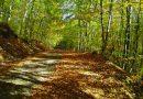 Απαγόρευση Κυκλοφορίας σε δασικές περιοχές της Περιφερειακής Ενότητας Χαλκιδικής λόγω πολύ υψηλού κινδύνου πυρκαγιάς