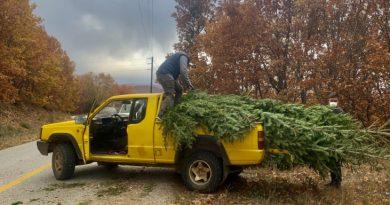 Ταξιάρχης Χαλκιδικής: Το 24ωρο των ελατοπαραγωγών
