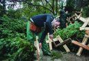Πρόεδρος της κοινότητας Ταξιάρχη Χαλκιδικής Γ. Ξάκης: Αλαλούμ με τα χριστουγεννιάτικα δέντρα,Κόβουν έλατα, αλλά δεν ξέρουν αν θα τα πουλήσουν